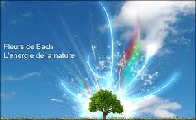Les fleurs de Bach : une aide dans la gestion des émotions dans Aide au sevrage imagesca9w1gb5